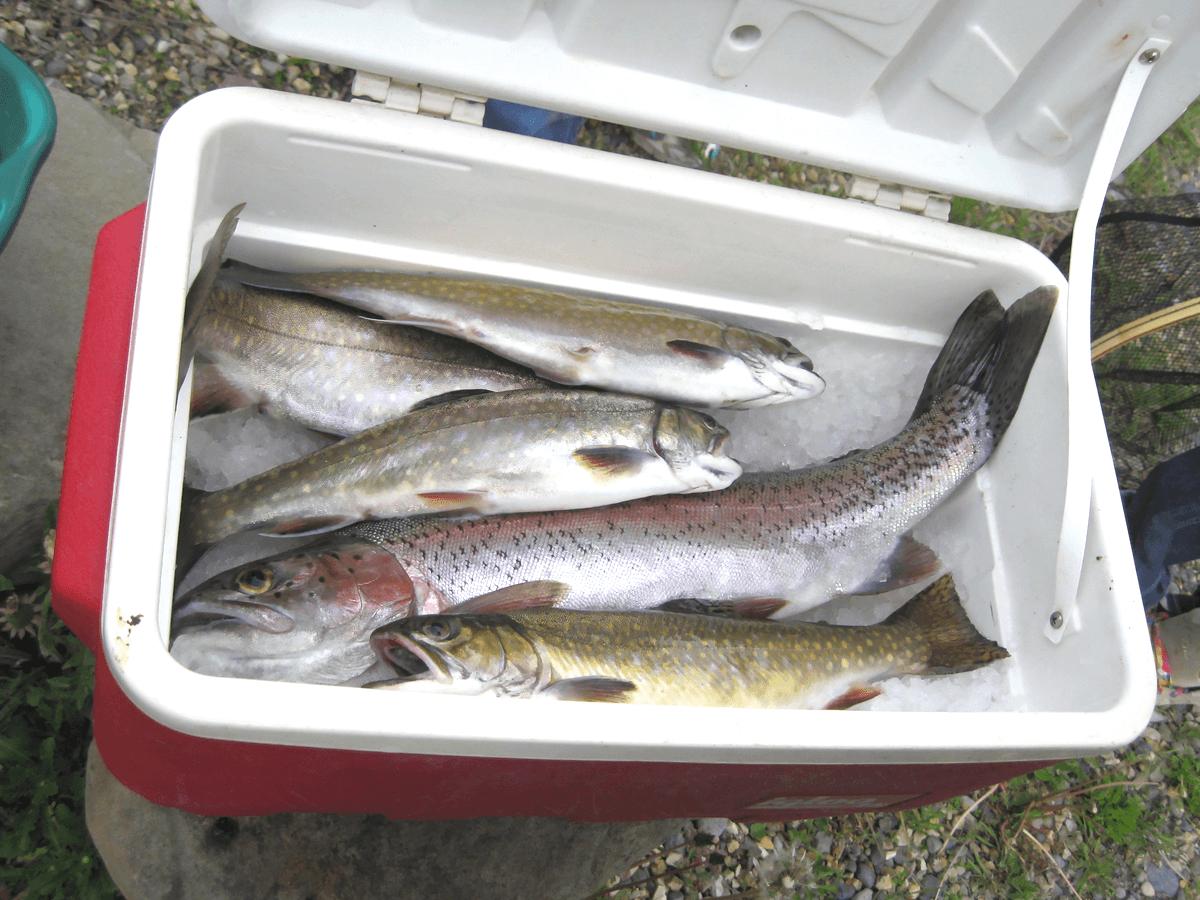 釣り用の人気クーラーボックスおすすめランキングTOP15!選び方から使い方までご紹介