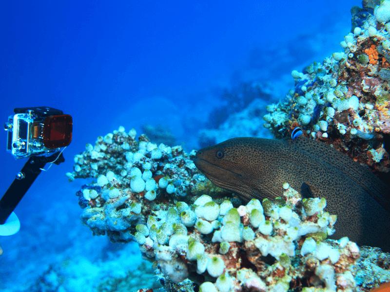 ダイビングで使うカメラの種類は大きく分けると2種類