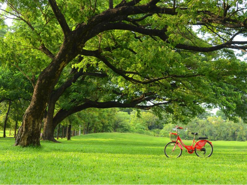 自転車保険を選ぶポイント6つ